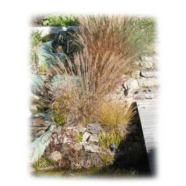 graeser-teich-herbst-uferpflanzen