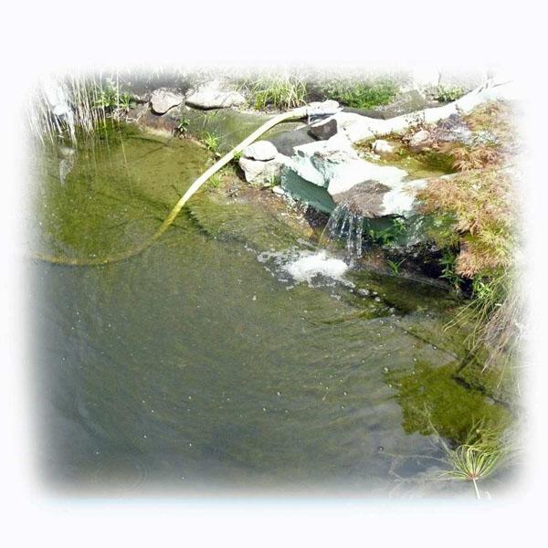 welche-wasserwerte-fuer-klares-teichwasser