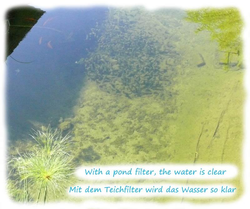 glasklares-teichwasser-mit-der-richtigen-filteranlage