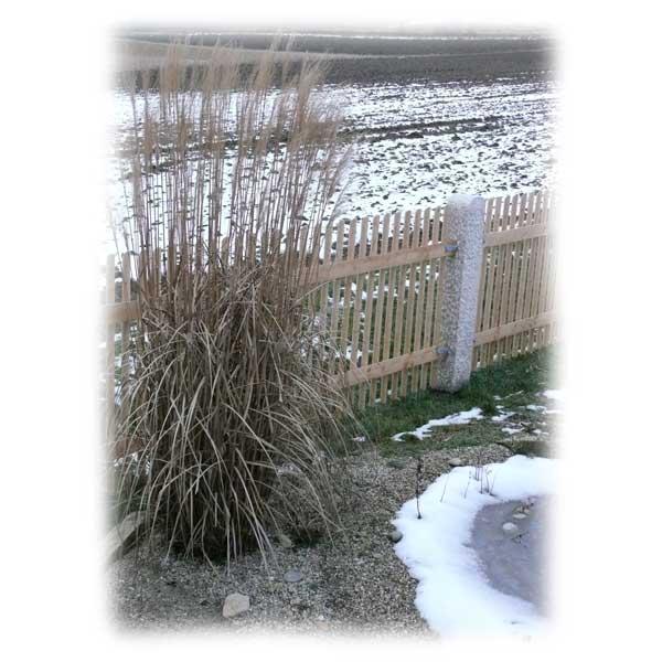 teich-im-winter-richtig-pflegen