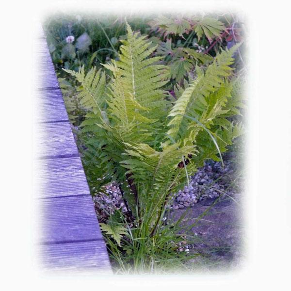 eisengehalt-im-teich-fuer-wasserpflanzen