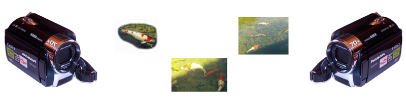 koi-video-teich-banner